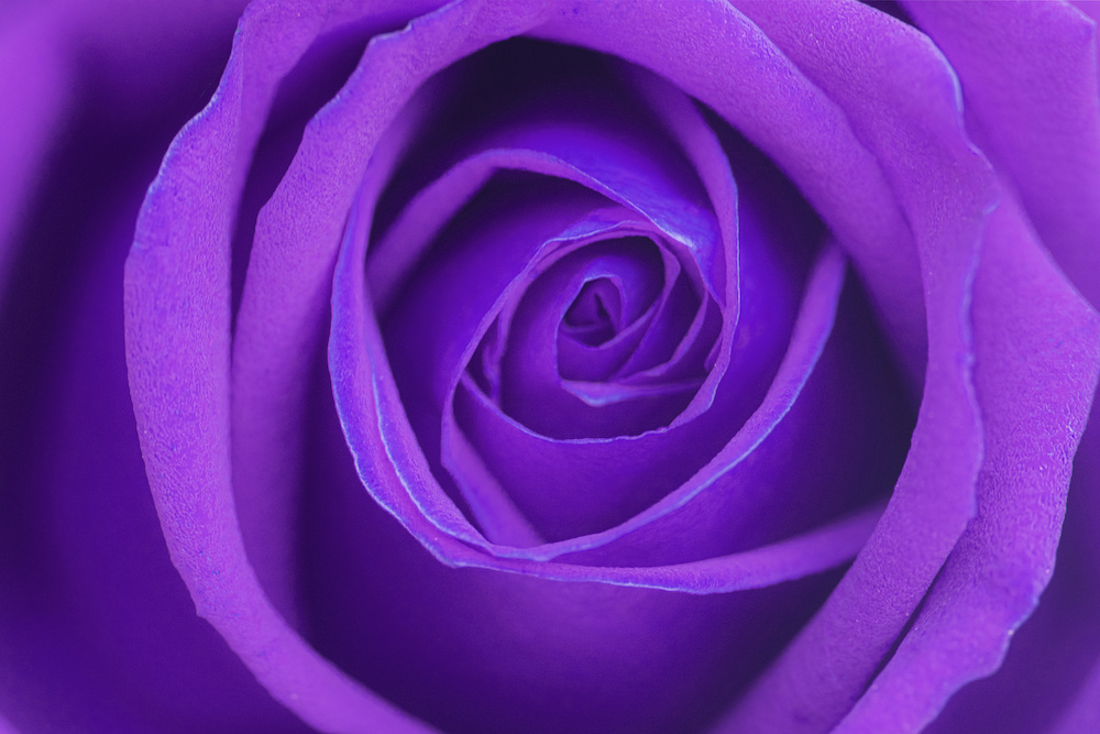 "Bacchetta recensisce ""La Rosa di Beltane""…"