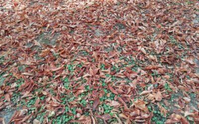 Equinozio d'autunno: il suo significato spirituale