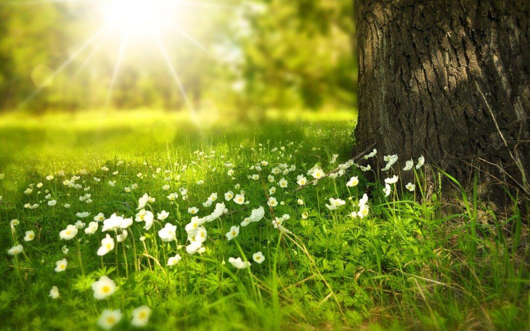 Equinozio di Primavera – pulizia e nuovi inizi